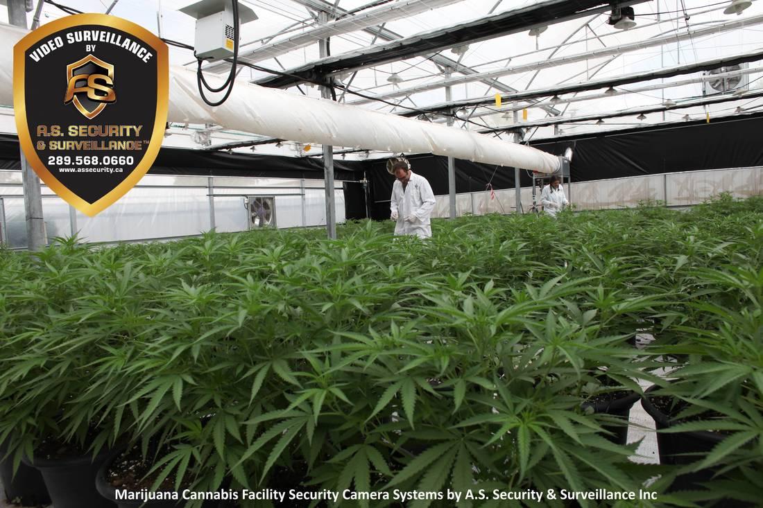 Marijuana Cannabis Facility
